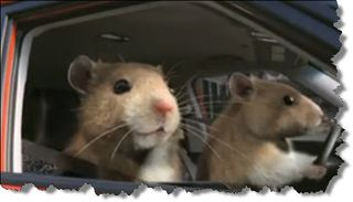 "Kia Soul ""How We Roll"" Hamsters"
